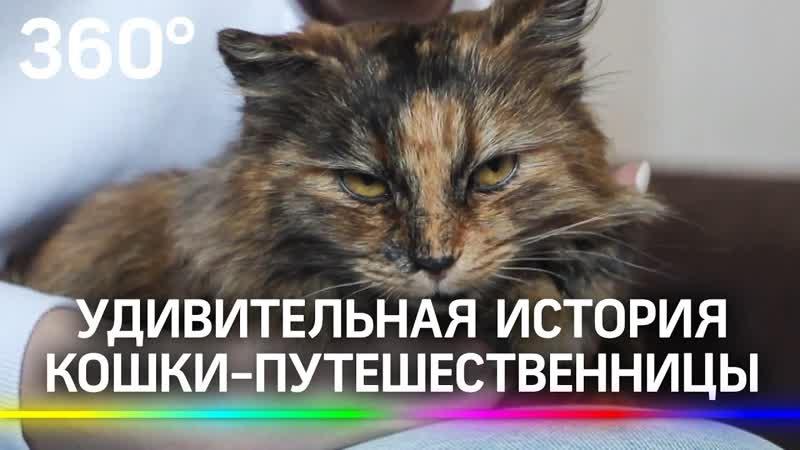 Кошка разведчица устроила переполох среди военных и заставила их поменять маршрут