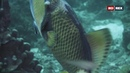 «Дикий мир океана Таиланд» Познавательный, природа, животные, путешествие, 2020