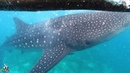 Top Travel 2020 Oslob Whale Shark Watching Philippines 01.02.2020