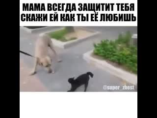 Почему собака без намордника