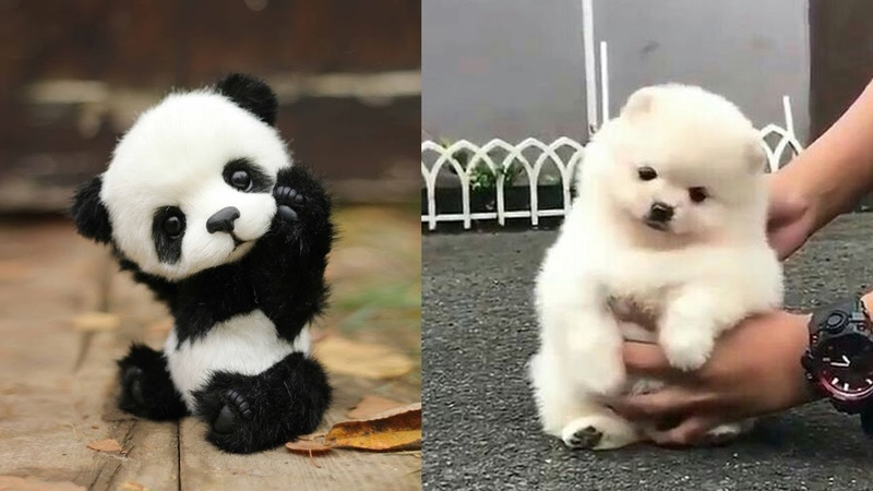 Cute baby animals Videos Compilation cutest moment of the animals Soo Cute 9