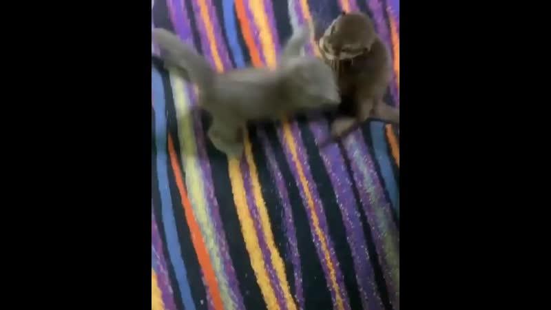 Завели двух котят, но один из них какой-то...