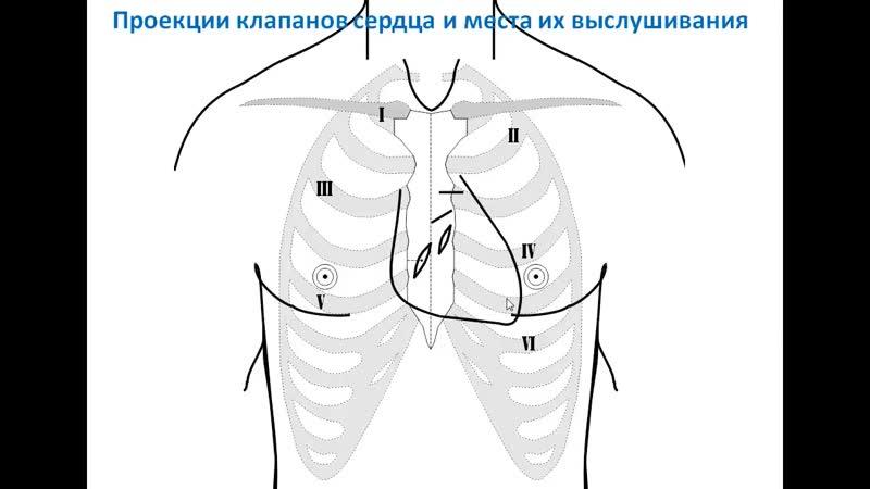 Видеолекция Топография сердца проф В А Изранов