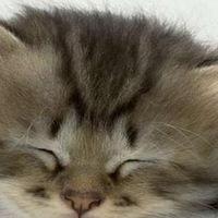 Котятки и собачки