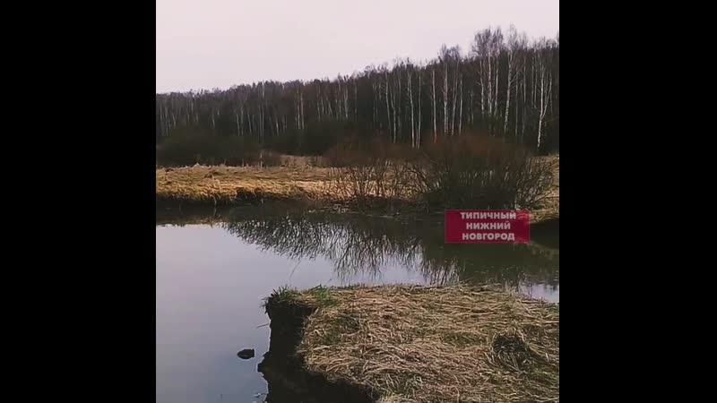 Карстовый провал рядом с Арзамасом стал озером