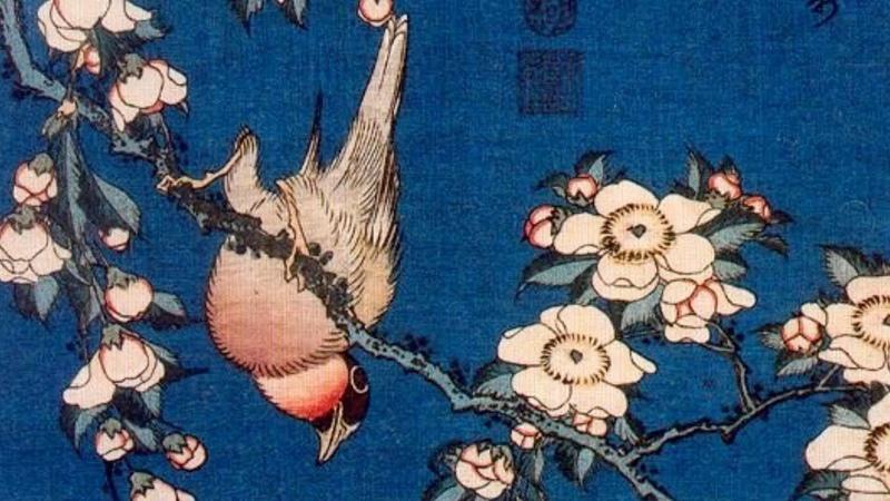 Хокку Сакура и птица. По мотивам гравюр Кацусика Хокусая. Японская поэзия