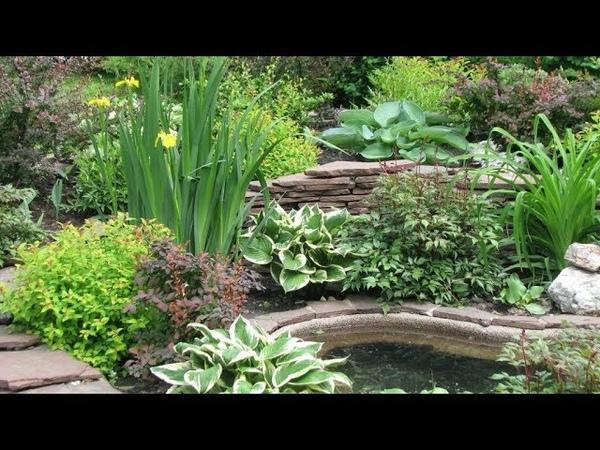 Как красиво разместить хосты в саду