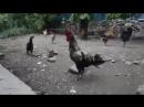 VIDEO-2018-05-15-17-33-19.mp4