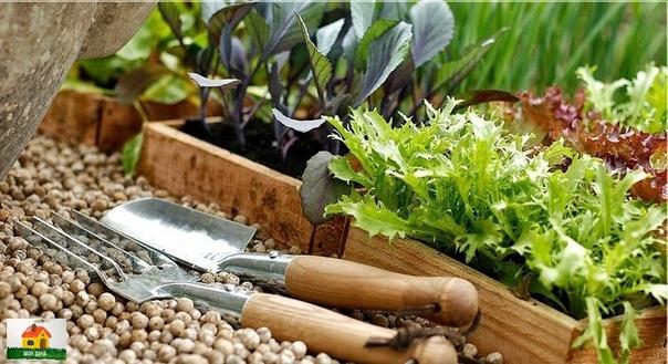 КОГДА САЖАТЬ РАССАДУ В 2020 ГОДУ - КАЛЕНДАРЬ ПОСАДКИ РАССАДЫ Работа в саду или огороде требует огромных затрат, как физических, так и духовных. Ведь необходимо не просто посадить растение, но и