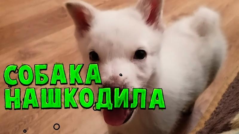 ВЛОГ Собака нашкодила придется делать ремонт