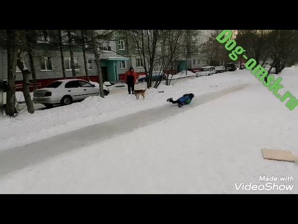 Собаки и негодующие люди на улицах города