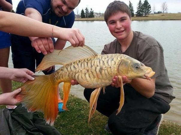 Поймали золотую рыбку