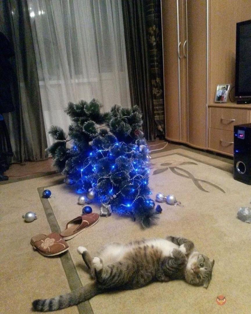 Кот с ёлкой, кот у ёлки, кот под ёлкой - ну вот и началось