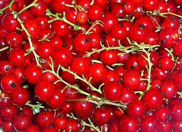 КРАСНАЯ СМОРОДИНА: СОВРЕМЕННЫЕ СОРТА! Уникальные декоративные, вкусовые и лечебные свойства мы склонны чаще искать в заморских ягодах и фруктах, чем в тех, которые знакомы нам с самого детства.