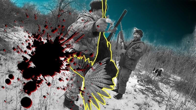 Қырғауыл аң аулау Охота на фазана Pheasant hunt 191202 Hatsan escort xtreme