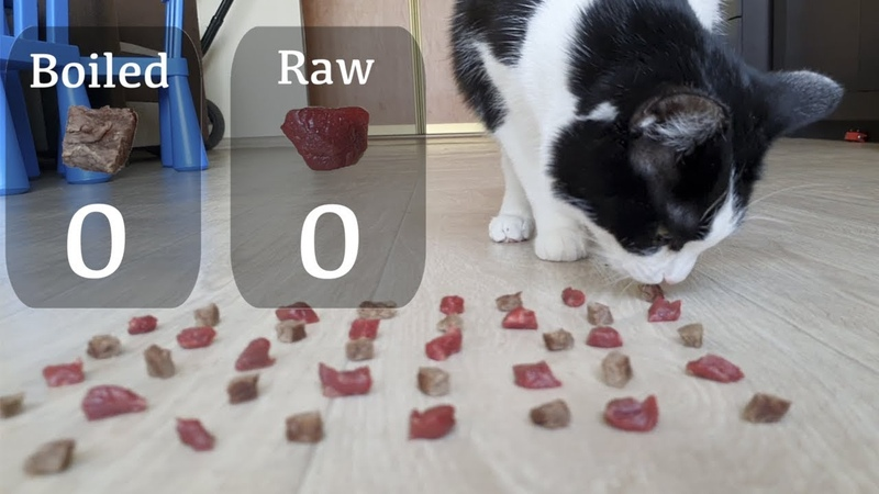 Raw or boiled meat Which will the cat choose