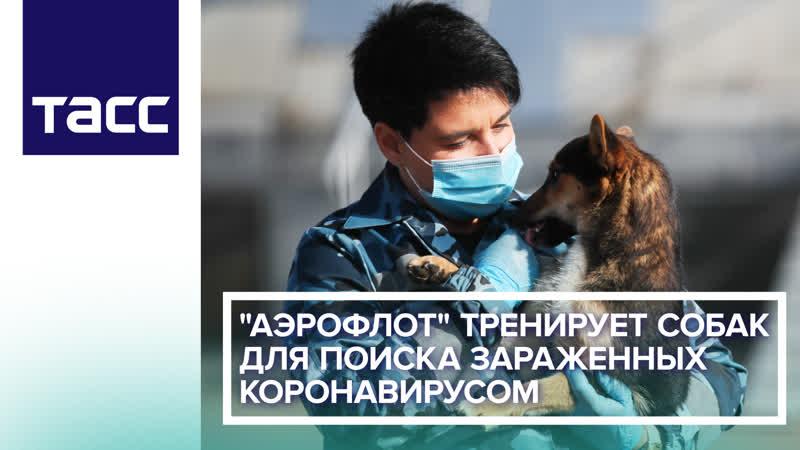 Аэрофлот тренирует собак для поиска зараженных коронавирусом