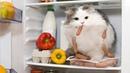 Смешные кошки приколы про кошек и котов ..