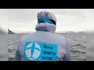 1-я экспедиция Фонда защиты китов. Териберка 2019