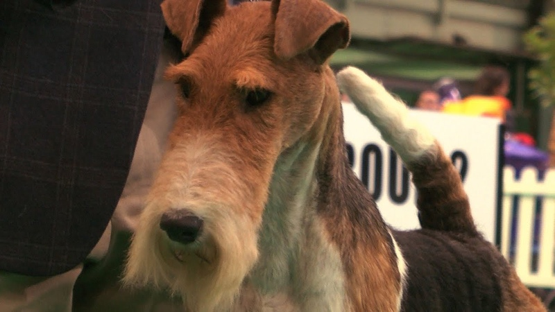 Birminhgm National 2015 Terrier group FULL