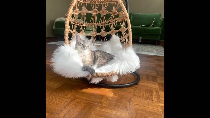 Качели для кошки
