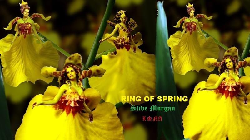 LONA ☀️ RING OF SPRING ☀️ Stive Morgan