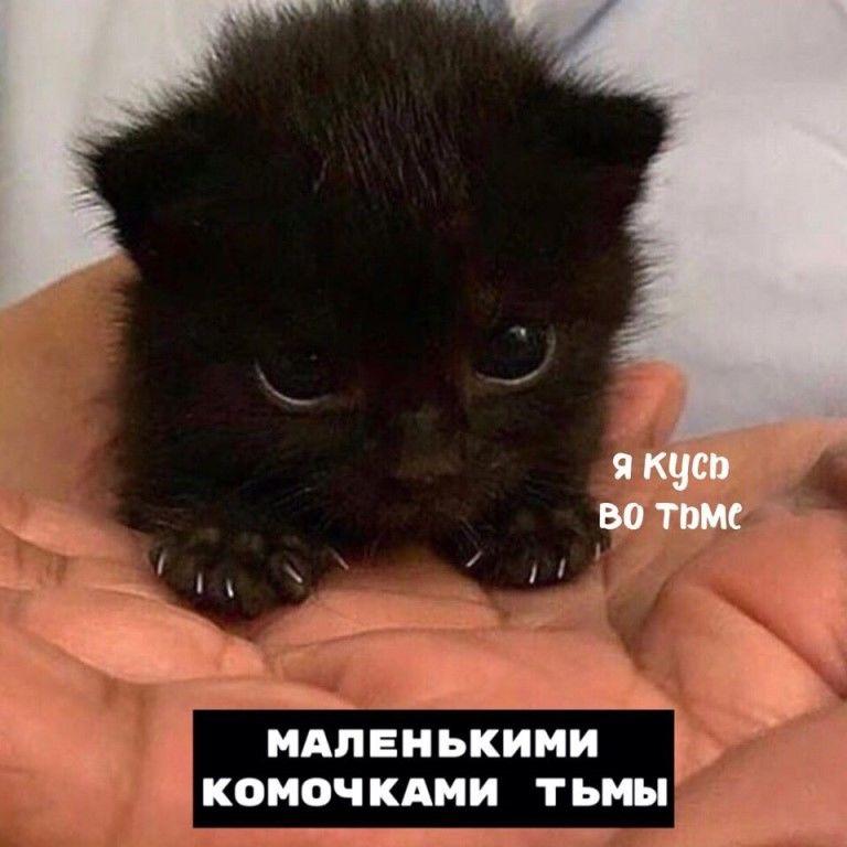 Котики бывают: