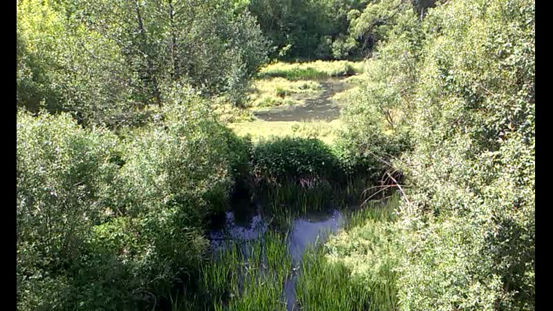 0502 г Орёл река Сухая Орлица бобровая плотина камыш рогоз природная еда пос Шиловский Биофабрика