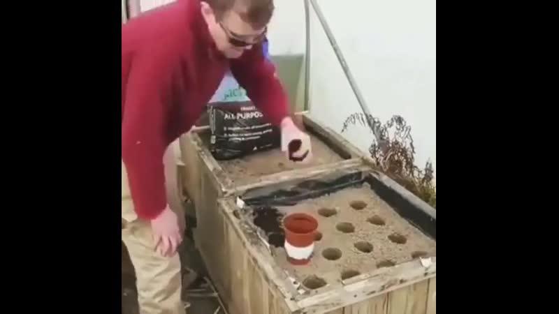 Как вырастить огромную морковь