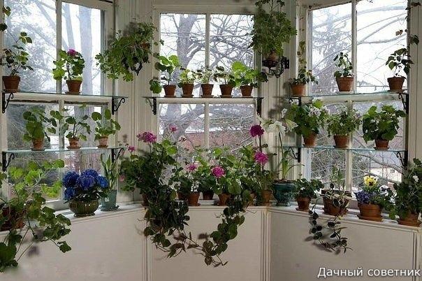 5 секретов ухода за цветами