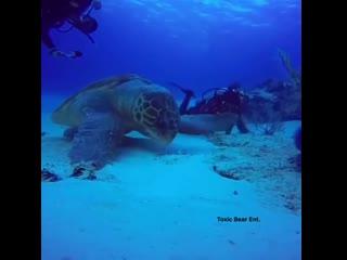 Это может быть самая большая черепаха, когда-либо записанная на видеокамеру