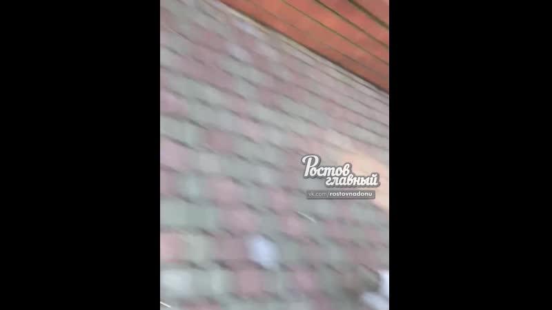 Пьяный напал на человека в зоопарке, а потом сбежал 25.4.2019 Ростов-на-Дону Главный
