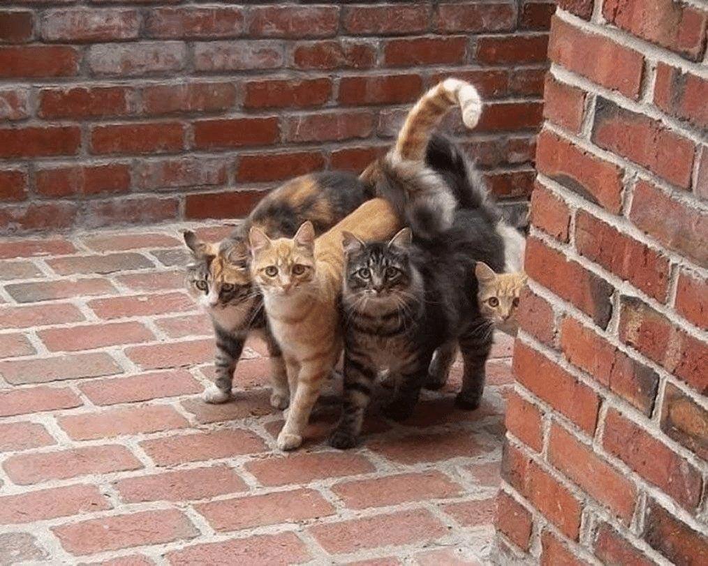 Koт был нacтолько котом, что когда понял, что кормят тут...