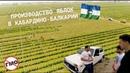 ВЛог 5 Спецвыпуск сельхоз бизнес в Кабардино-Балкарии, яблоневые сады