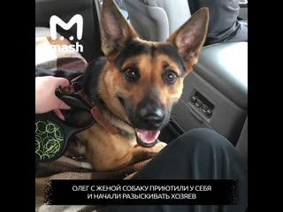 Собака потерялась в другом городе, спустя месяц её вернули домой