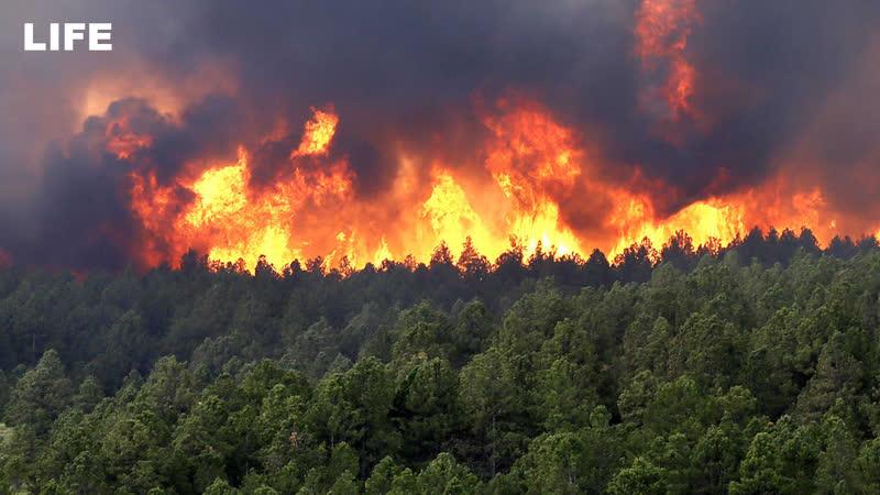 Активисты Молодёжки ОНФ спасают сибирские села от лесных пожаров