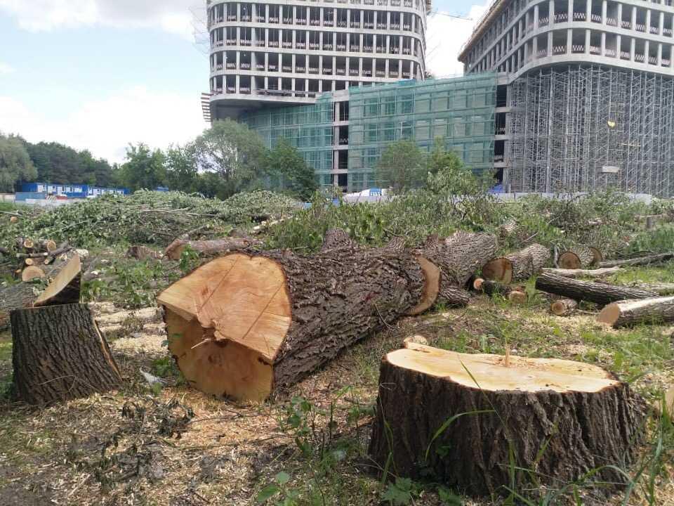 Полтора гектара леса вырубили в Москве ради
