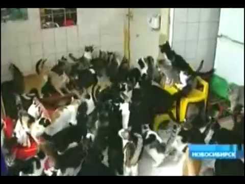 Женщина приютила 130 кошек у себя в квартире