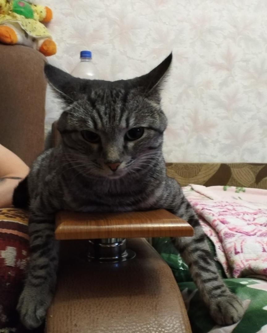 Хаммер очень серьёзный котик.