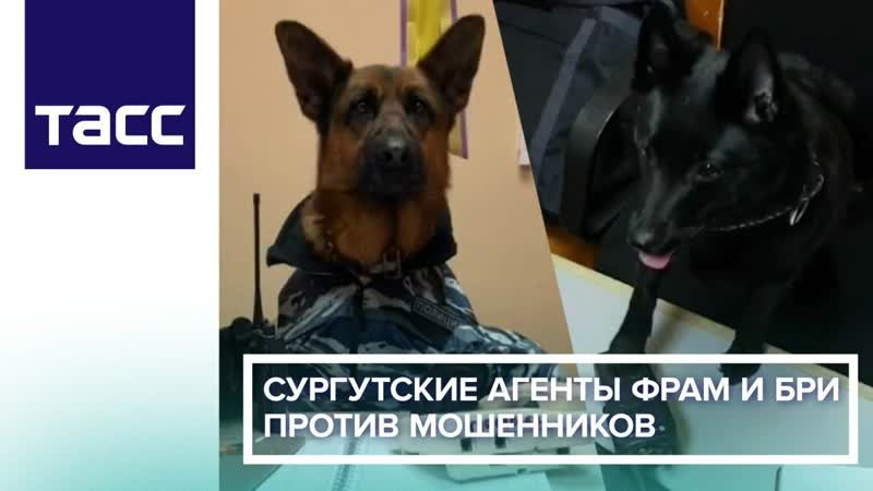 Сургутские агенты Фрам и Бри против мошенников