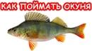 Как поймать окуня на микроджиг Рыбалка с блондинкой на ультралайт Рыбалка 2019