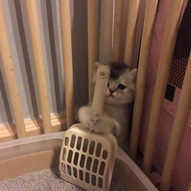 Самостоятельный котей