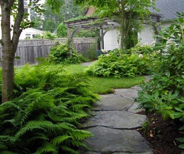 Все, что нужно знать о папоротнике, прежде чем посадить его на своем участке. Папоротник прекрасный выбор для тех садоводов, которые не могут уделять много времени уходу за цветником. Красивый,