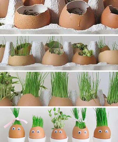ЗЕЛЕНЫЙ ГАЗОН НА ПОДОКОННИКЕ Из яичной скорлупы можно сделать замечательные маленькие горшочки. Посадите в них семена злаков и других растений. Ребенку будет очень интересно наблюдать, как на