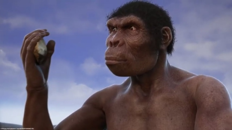 Evolution from ape to man From Proconsul to Homo heidelbergensis