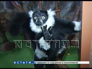 Зоопарк Лимпопо просит помощи для животных, которые начали голодать
