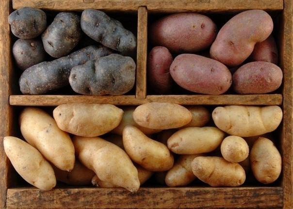 Основные ошибки хранения картофеля