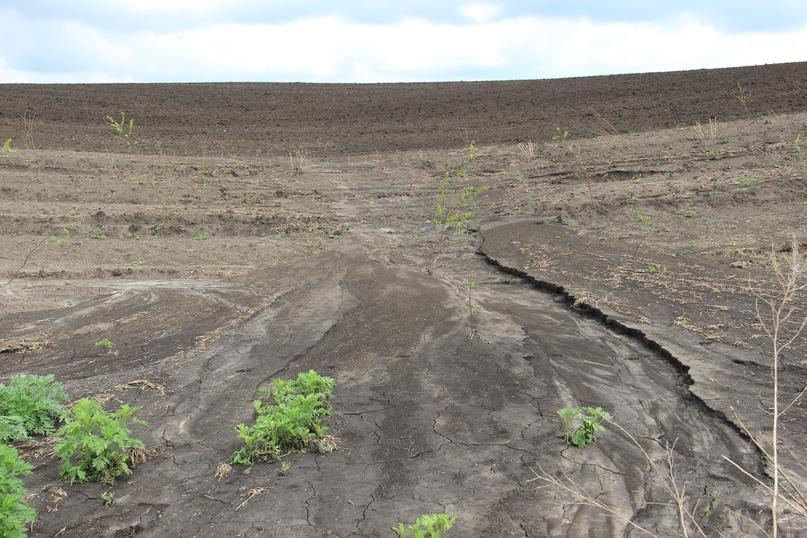 Вырубка полезащитных и оврагобалочных полос приводит к смыву гумусового горизонта