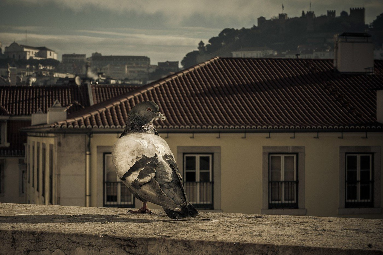 Moments in Lisbon by Ron Gessel