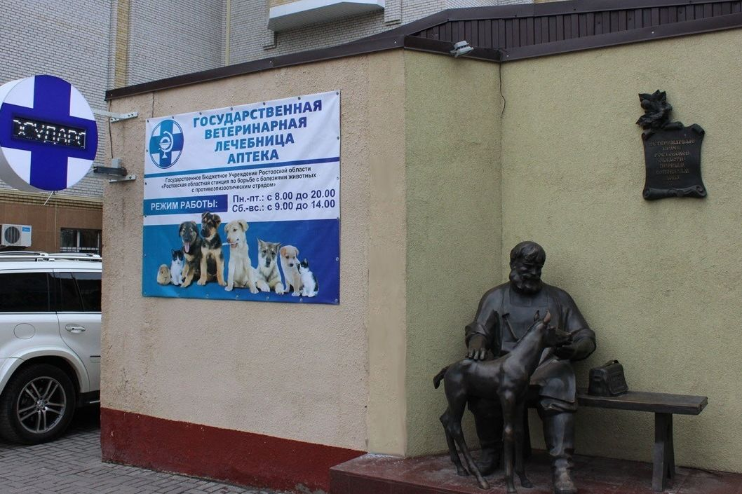 День льготной стерилизации собак и кошек в Ростовской области пройдет 30 апреля